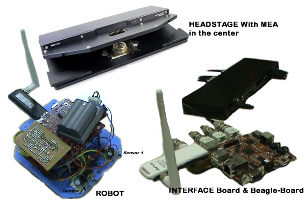 Components of the neuro-electronic hybrid system.